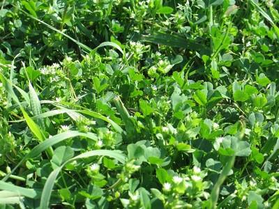 Flip flops, green grass & contentment 003